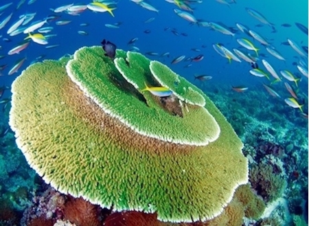 Picture for category DIVING IN MALDIVES