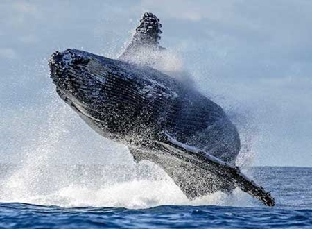 Picture for category WHALE WATCHING
