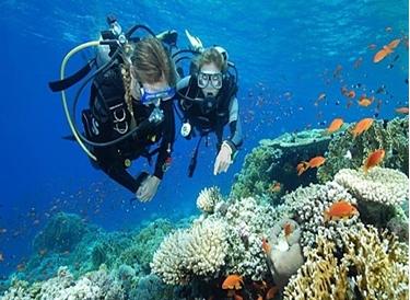 Picture of PADI Scuba Diver